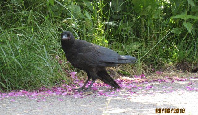 Hilflosen Vogel gefunden – was tun?