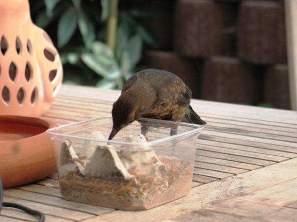 Erst, wenn der Vogel eigenstänbndig frisst.......
