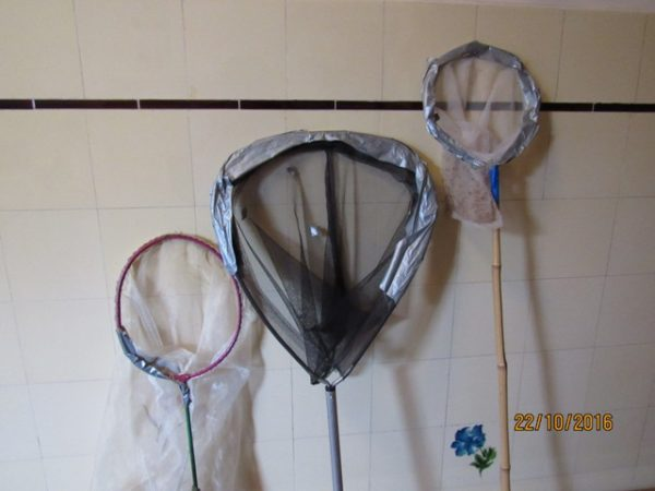 Den mittleren Kecher verwende ich zum Fliegen fangen, den linken Kecher (ein umgebauter Tennisschläger mit tiefem, feinen Netz) für Wiesenplankton und den rechten Kecher für Grashüpfer und Schuster.