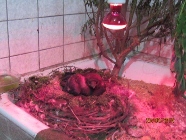 besonders verletzte Vögel benötigen häufig eine aufwändige, individuelle Pflege