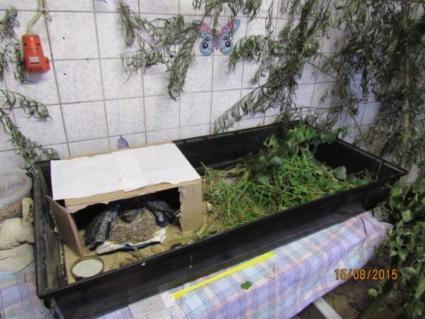 in der Jagdwanne habe ich für die Bachstelzen lebende Heimchen ausgesetzt......