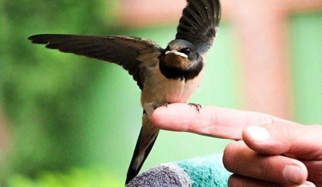 Wenn der Vogel fliegen lernt
