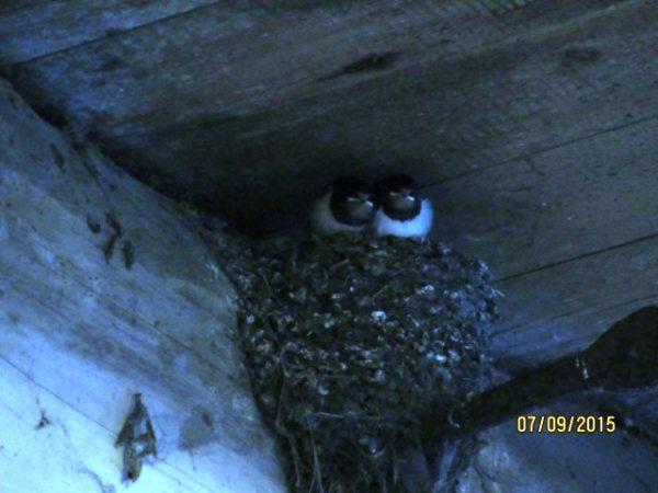 Die anderen 2 haben wir mit Kieselgur behandelt und in ein leeres Nest umgesetzt...
