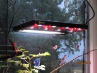 Beleuchtung mit Tageslichtspektrum inkl. UV