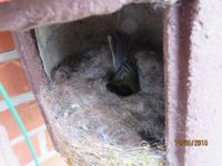 Höhlenbrüter sitzen die Schlechtwetterphase oft im Nest aus und wärmen dort ihre Jungen