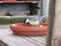 Vielen Vögeln helfen Sie durch die Schlechtwetterphase, indem sie Ihnen Futter für sich und Insekten für die Kinder raus stellen.