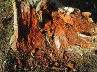 Totholz ist Nistplatz für viele heimische Insekten