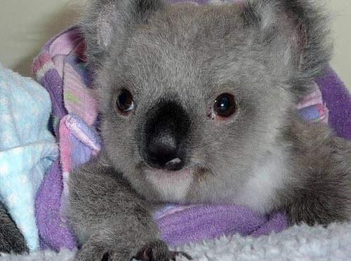 Liste von Wildtierrettern in Australien