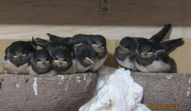 Impressionen aus dem Alltag der Wildvogelrettung